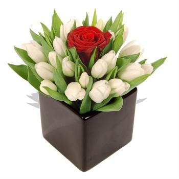 hermoso arreglo de  20 tulipanes y una rosa  800 pesos