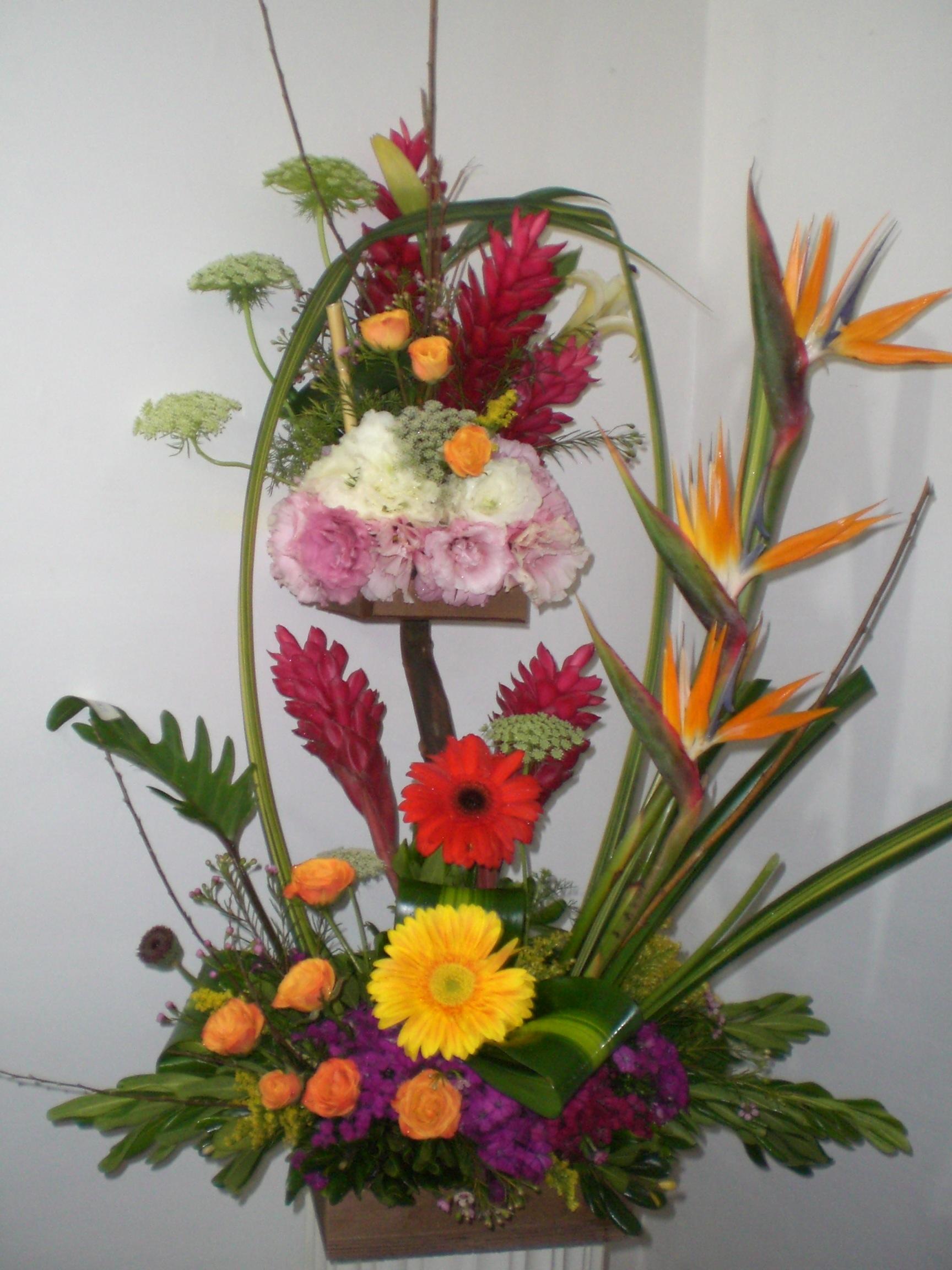 Inicio flores y regalos para venezuela y el mundo for Plantas exoticas online